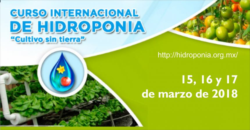 CURSO INTERNACIONAL DE HIDROPONIA